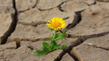 The Resilience of Children